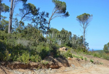Plots of land surrounded y green area for sale in Begur
