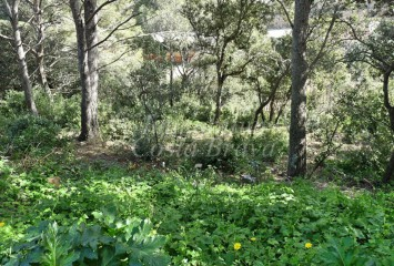 Building plot located walking distance to the beach, for sale in Begur, Sa Riera