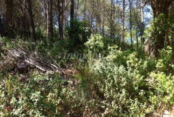 Plot of land for sale in AiguaXelida, Tamariu